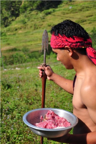 After the ceremonial slaughtering of a native pig in the Patpatayan Tree, portions are brought to the Dap-ay to be prepared as an offering.